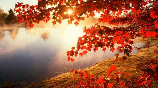 fall-leaves-wallpaper-3-Awesome-Wallpapers