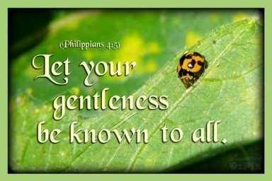 Let your gentleness be known to all. (Phil. 4:5)