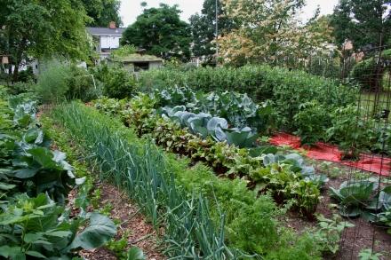 shannon-veg-garden