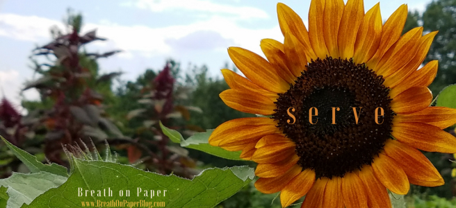 Called to Serve - Sunflower at Shine Springs Farm - Breath on Paper - BreathonPaperBlog.com - Photo by Sheree Martin